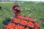 Gürer, tarımsal sorunlar için Meclis araştırması açılmasını talep etti