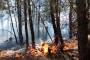 Mersin, Hatay ve Muğla'da orman yangınları çıktı