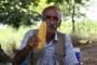 Mısır yetiştiricisi isyanda: Devlet çiftçiyi ölüme mahkum etti