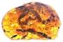 Dinozor çağında yaşamış yılan fosili bulundu