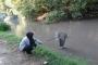 Domaniç'te toplu balık ölümleri yaşandı