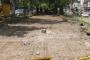 İBB'den Gazi Bulvarındaki çınar ağaçları için açıklama: Koruma altında
