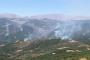 'Dersim'deki orman yangınlarına müdahale edin' çağrısı