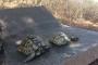 Çanakkale'deki ot yangınında kaplumbağalar öldü