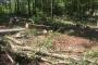Mahkeme, Balaban köyündeki ağaç katliamına 'dur' dedi