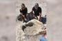 Kayserili çoban 10 milyon yıllık fil fosili buldu