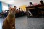 Yaz tatili bitti; kedi 'Tombi' okula döndü