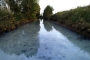 Meriç deresi fabrika atıklarıyla kirletiliyor
