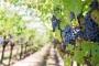 Üzüm bağları ile bilinen Kavacık köyüne mermer ocağı izni
