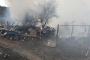 Büyükada'da 9 atın ölmesine neden olan yangına kısa devre yol açmış