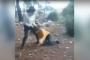 Ormanlık alanda liseli öğrenciye işkence eden 6 kişiden 3'ü tutuklandı