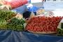 Aralık ayında domates, salatalık ve soğana yüzde 20'den fazla zam geldi