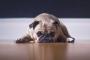 Evcil hayvanların birçoğunun psikolojisi bozuk