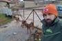 Kütahya'da hayvan katliamı: 10 köpek zehirlenerek öldürüldü