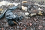Ankara ve Diyarbakır'da onlarca sokak köpeği öldürülmüş halde bulundu