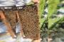 Aydın'da arılar tekrar ölmeye başladı, olağan şüpheli ise JES