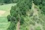 Kandıra'da ağaç katliamı: Taş ocağı için 5 bin ağaç kesilecek