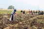 Hükümetin sıfır vergili ithalatı patates üreticisini vuruyor