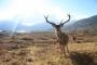 Kızıl geyikler için iyi haber: İdare mahkemesi ihaleyi durdurdu