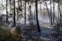 Antalya Kumluca'daki orman yangınında 10 hektarlık alan kül oldu