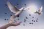 Sanatçı ve yazarlardan operasyona tepki: Barış diyenler tek ses olmalı