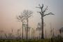 Amazon ormanları yanıyor: Bolsonaro döneminde tahribat arttı