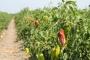 2019 çiftçi için kara yıl oldu: Mahsulden önce borç filizlendi