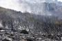 Bodrum'daki orman yangınında 10 hektar yandı; yeşil alan siyaha döndü
