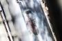 Cemal Kaşıkçı cinayetinin 1. yılı: Birçok soru hâlâ yanıtlanmadı