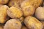 Borçlu patates üreticisi, maliyetin altında fiyat veren tüccara mecbur bırakıldı