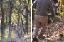 Kaz Dağları'nda hukuksuz biçimde süren ağaç katliamı belgelendi