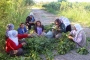 Bismil kayyumu kadınların bahçesine el koydu, 50 kadın işsiz bırakıldı