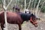 Adalı derneklerden ortak çağrı: Öncelik hayattaki atların sağlıklı kalmaları