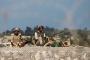 Mısır, Sina Yarımadası'nda 5 gün içinde 241 IŞİD militanını öldürdü