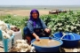 Kaybolan hayatlar mevsimlik tarım işçileri