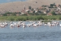 Bafa Gölü neden can çekişiyor?
