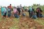 Tarım işçisi kadınların payı:Çocuk evlilik,çocuk işçilik