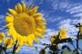 Bitkiler kendi güneş  kremlerini yapıyor