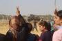 Urfa Valiliği, Kobanê'ye askeri harekat iddiasını yalanladı