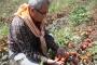 Küçük çiftçilik yok oluyor, tekeller güç kazanıyor