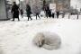 Kış günlerinde sokak hayvanları için neler yapılabilir?