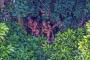 Temasa geçilmemiş yerlilerin fotoğrafları çekildi