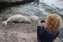 Akdeniz foku, kayalıklarda dinlendi