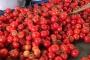 Rusya'ya domates yasağı kalktı ama Antalya'dan siftah yok