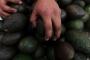 Meksika'da 7 avokado işçisi öldürüldü