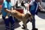 Belediyeden Gezi Parkı'ndaki köpeklere kötü muamele