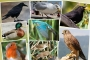 Dost mu düşman mı? - Mitoloji ve edebiyatın gediklisi 8 kuş