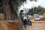 Kuşadası'da 700 yıllık zeytin ağacı kurtarıldı