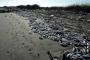 Fabrikanın 'Bayram hediyesi': Atık boşaldı  balıklar öldü