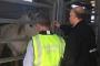 Avrupa'da at eti operasyonunda 65 kişi gözaltına alındı